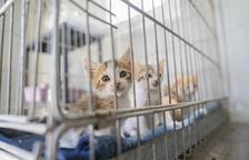 L'entrada de nous gats a la protectora d'animals es dispara aquest estiu a Tarragona