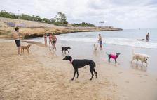 L'espai per a gossos de la platja del Miracle de Tarragona, pol d'atracció de visitants