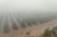 Unió de Pagesos pide que se periten los daños por la tormenta de Batea lo más rápido posible