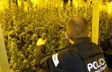 Imagen de archivo de las plantas de marihuana localizadas en la nave de la Ametlla de Mar.