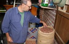 La cosecha de avellana se estanca en las 6.000 toneladas de producción, casi la mitad de una campaña normal