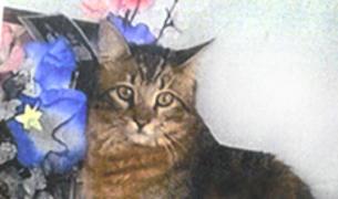 Imatge del gat desaparegut.