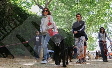 Paseo solidario de perros