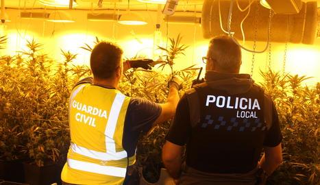Se han intervenido 305 plantas de cannabis sátiva con un peso de 89 kilos, 1 kilo de marihuana y numerosos útiles y fertilizantes para facilitar su cultivo interior.