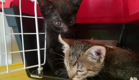 Los gatos buscan a una familia que los acoja en su casa.