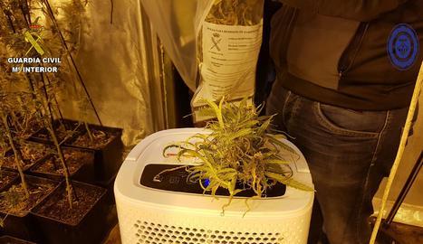 Imatge de la plantació indoor.