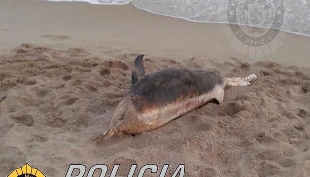 El dofí es trobava en avançat estat de descomposició.