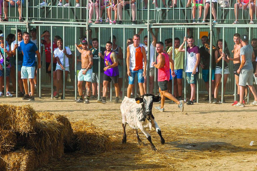 Las Vaquillas De Miami Atraen Un Año Más A Miles De Espectadores